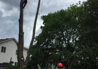 Limbwalker Tree Service london ontario (108)