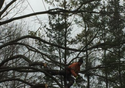 Limbwalker Tree Service london ontario (112)