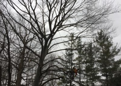 Limbwalker Tree Service london ontario (114)