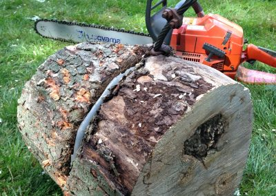 london tree services limbwalker (204)