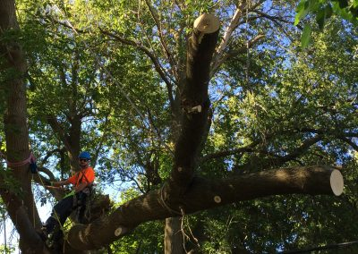 london tree services limbwalker (255)