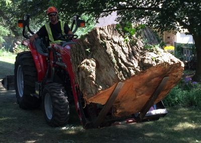london tree services limbwalker (289)