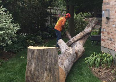 london tree services limbwalker (296)
